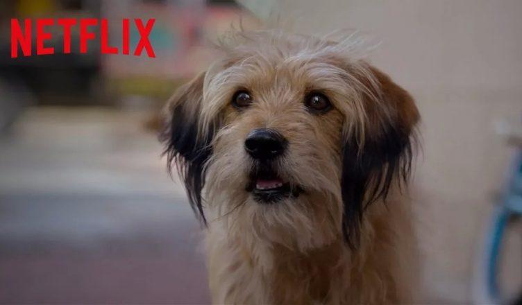 Benji - Netflix